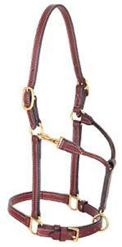 """Picture of 20-0535 Halter Leather 3/4"""" Double Buckle Crown"""