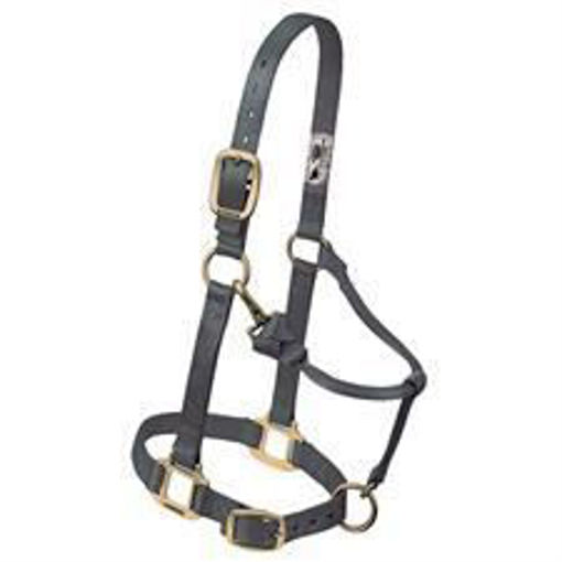 Picture of 35-7034 Weaver Adjustable Halter: Small Horse Size 500-800lb